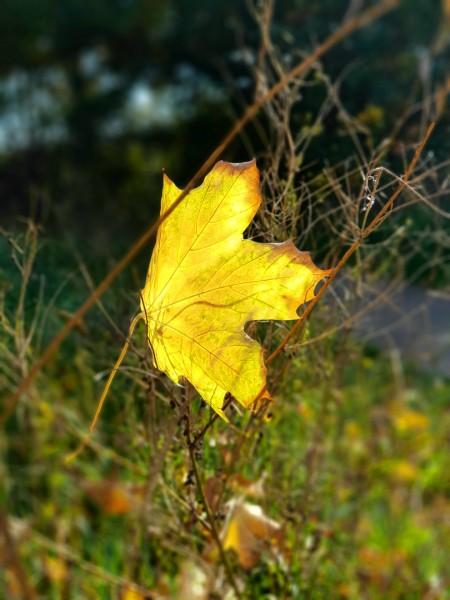 Herbst-Sonne-Bild-Blog